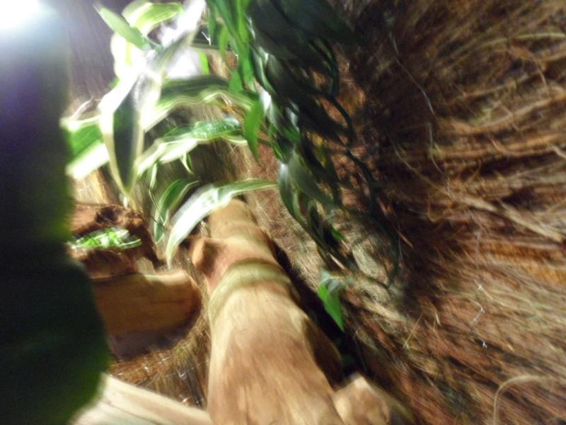 Terrarium maison de mon iguane rouge gaston Sam_1611