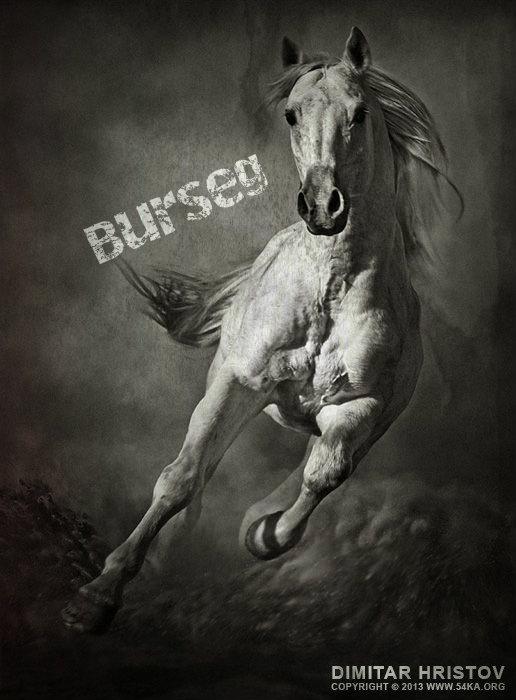 Dej avatar, komu chcesz! Burseg11
