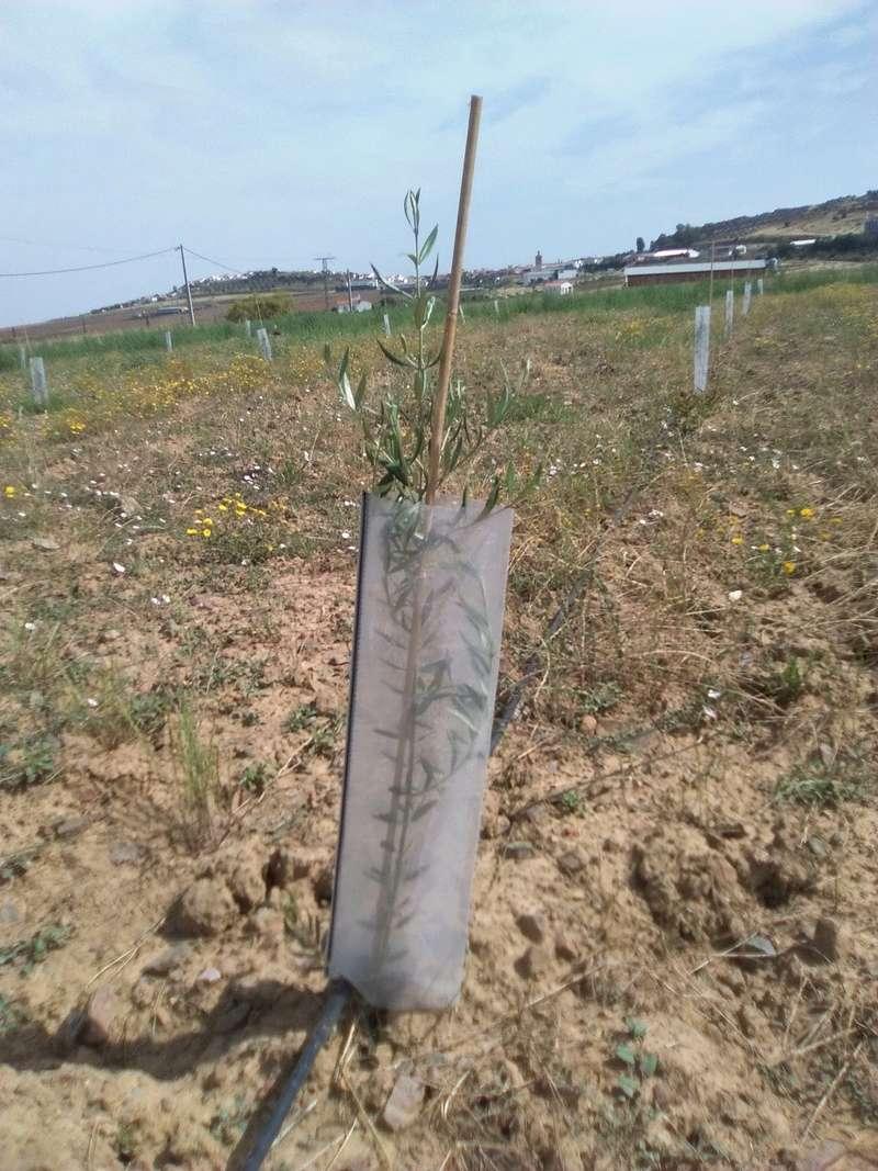 Protectores para plantones Img_2010