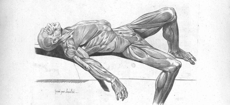 Un trouble passé Muscle11