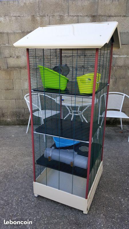 Besoin de conseils avant adoption de rats 25fdef10