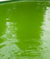 évolution couleur eau piscine Algues10