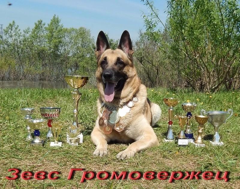 Восточноевропейской овчарки -щенки! Image_11