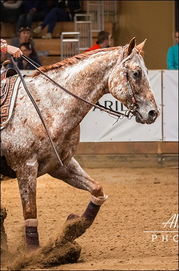 Appaloosa - Chentyt - Jument  Apaloo13