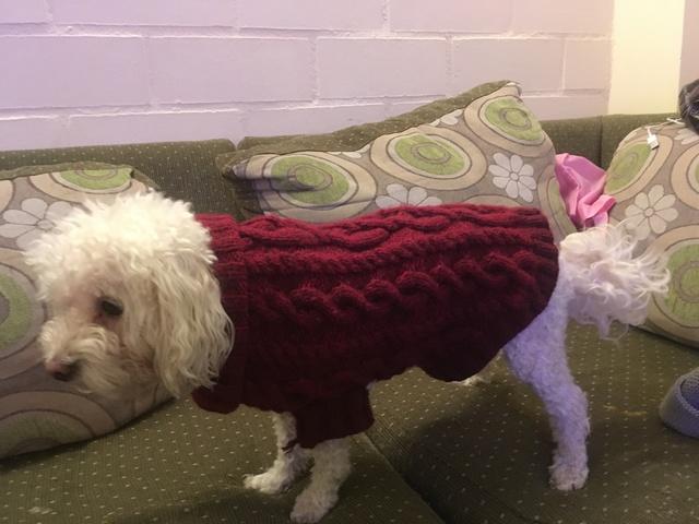 para - Sweater para mascotas Img_0310