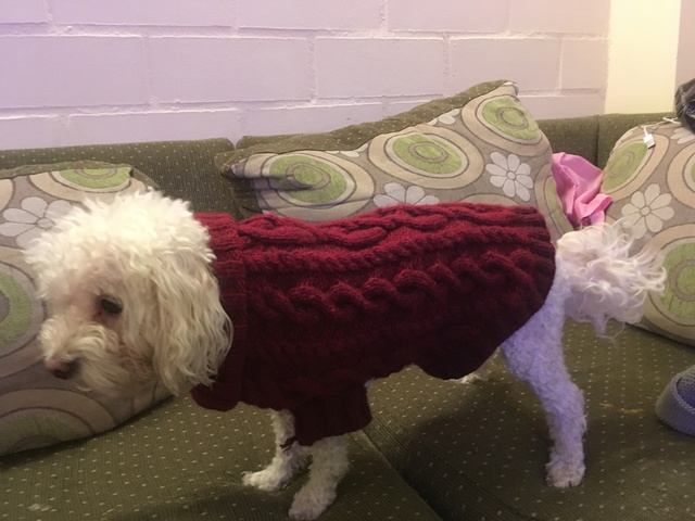 Sweater para mascotas Img_0310