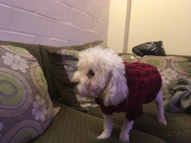para - Sweater para mascotas Img_0311