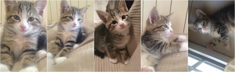Χαρίζονται 3 ομορφα γατακια Befunk10