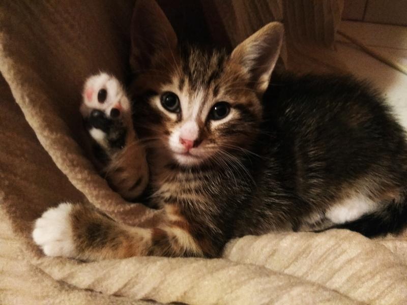 Χαρίζονται 3 ομορφα γατακια Img_2014