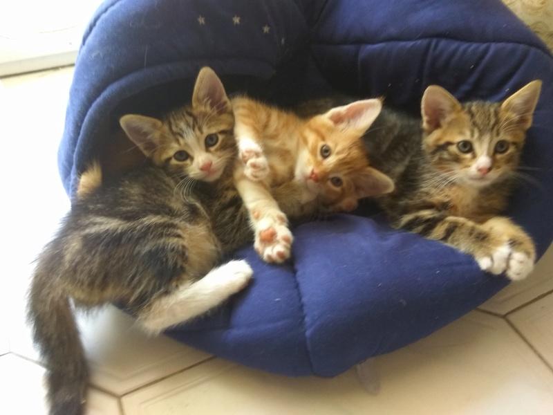 Χαρίζονται 3 ομορφα γατακια Img_2017