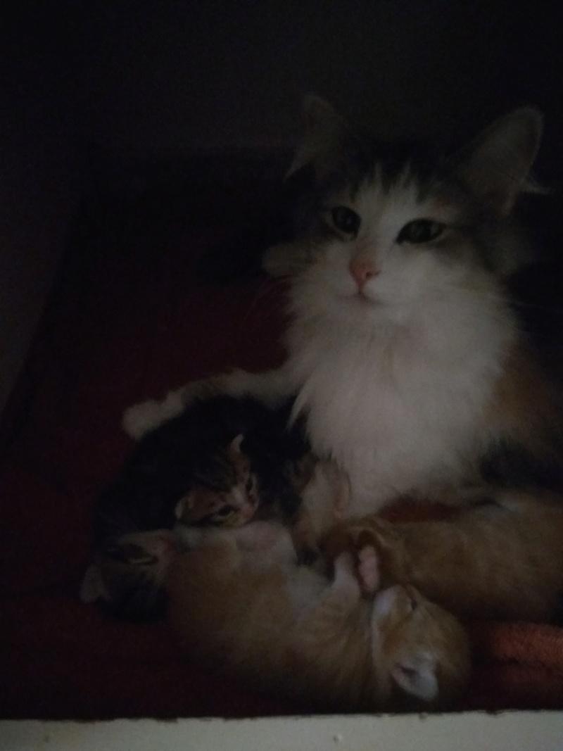 Χαρίζονται 3 ομορφα γατακια Img_2018