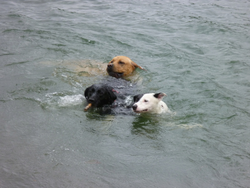 Dogs in the water P1010710