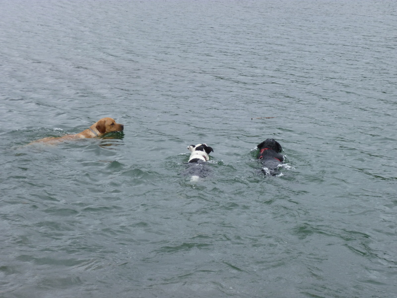 Dogs in the water P1010711