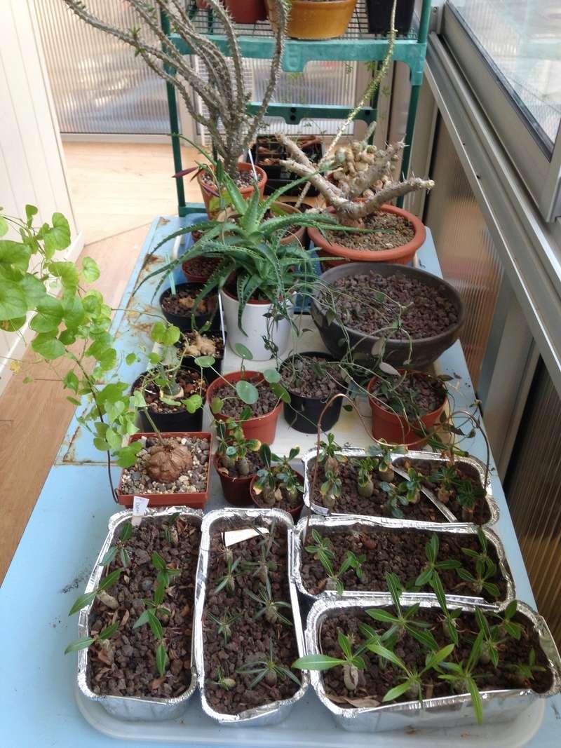 Pachypodium, Euphorbia etc. chez LuiColl Img_0714