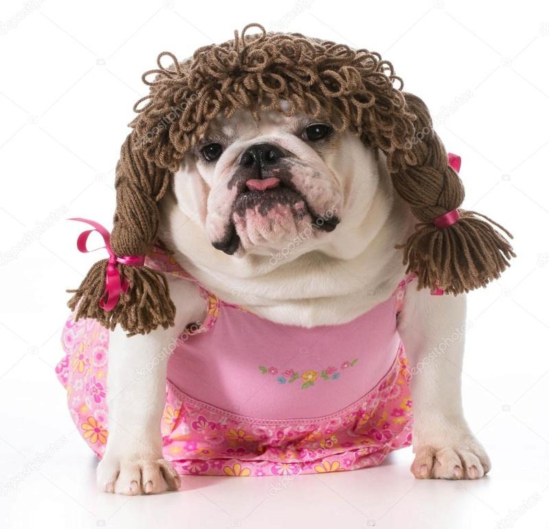 Recherche une jolie bulldog Deposi10
