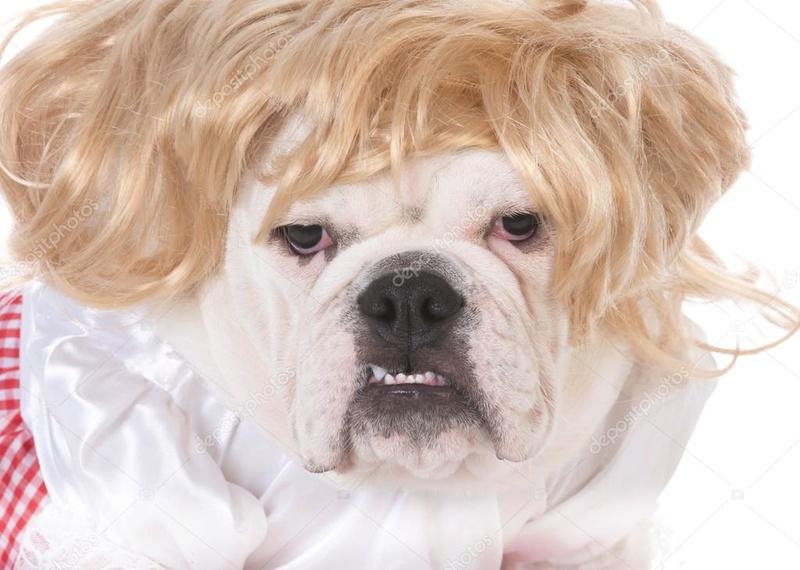 Recherche une jolie bulldog Deposi11