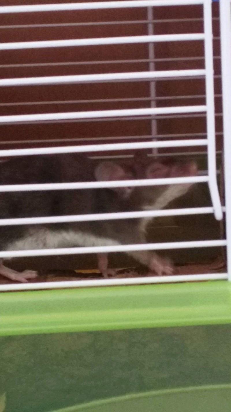 Inquiète pour les yeux de ma souris  Img_0315
