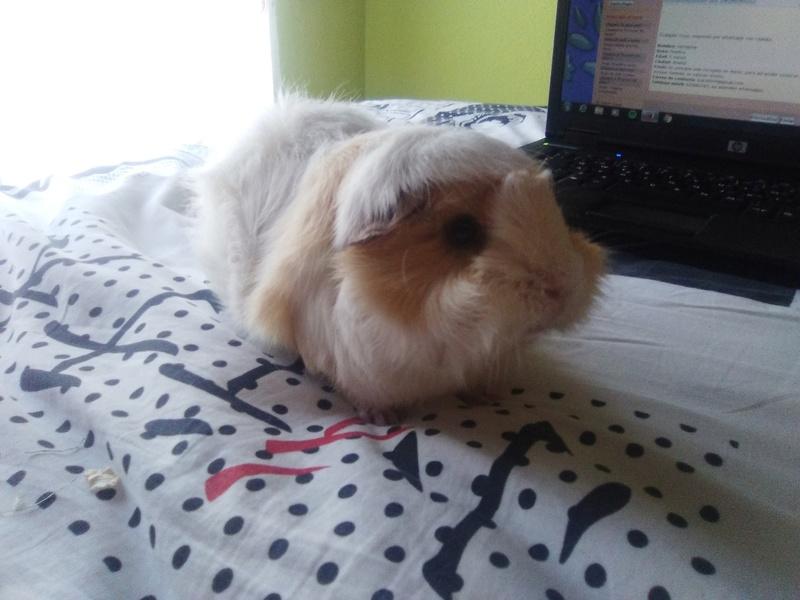 Hola! soy Hermione y busco nuevo hogar  Img_2012
