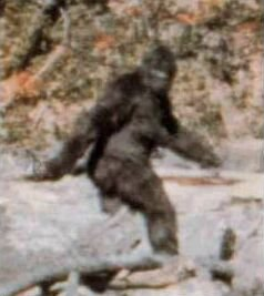 Is Bigfoot real? Patter11