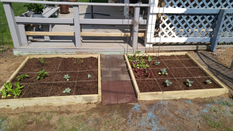 My 1st Sq Ft Garden in Rochester Garden11