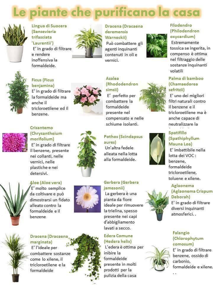Le piante che purificano la casa 19145810