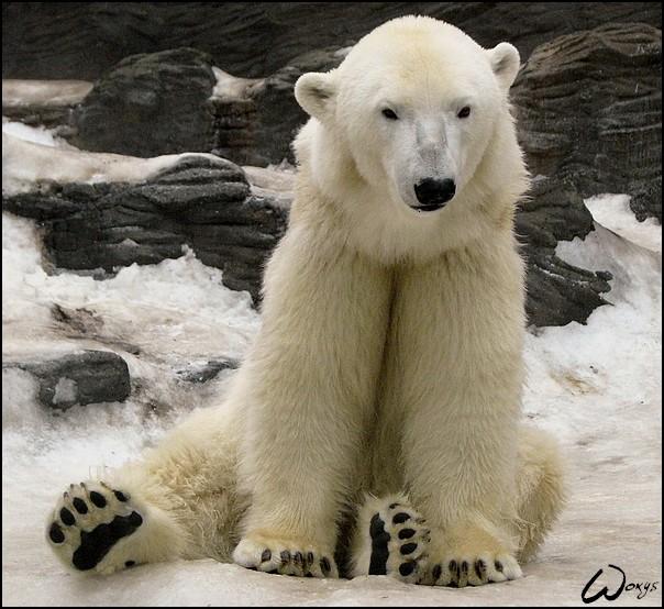 Koda, el joven hombre oso salvaje Tom_th10