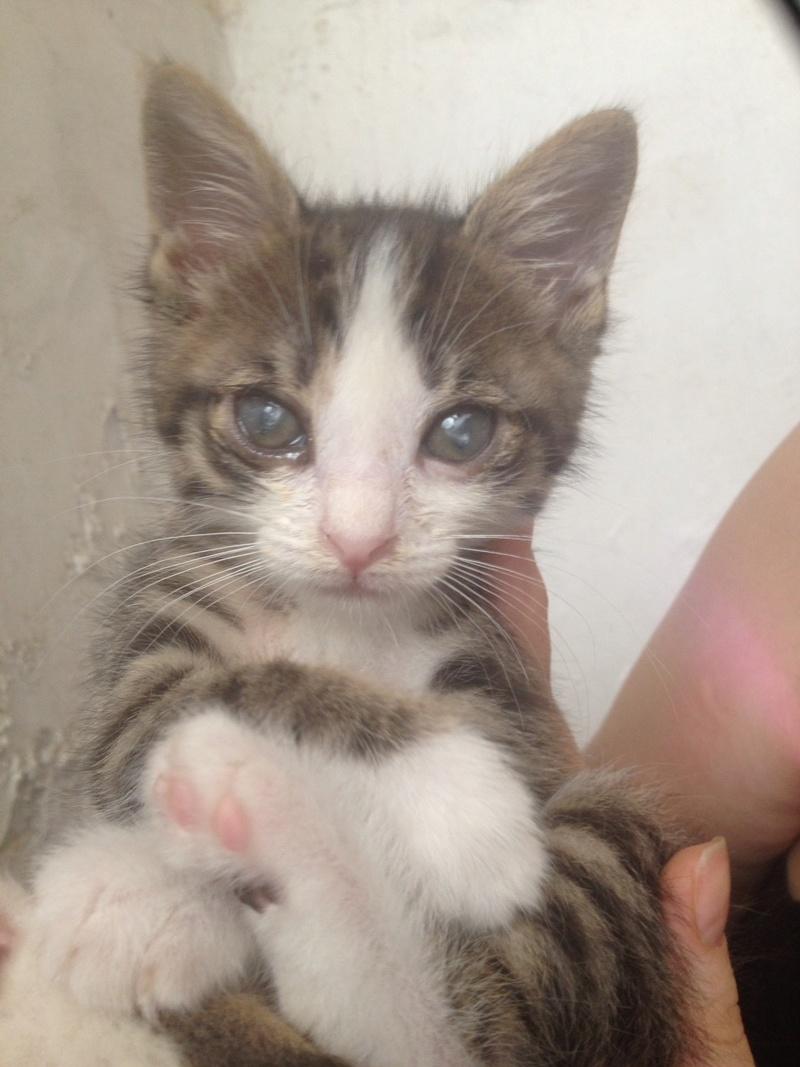 Γατάκι 1,5 μηνων με ελκος στο ματι 0-02-010