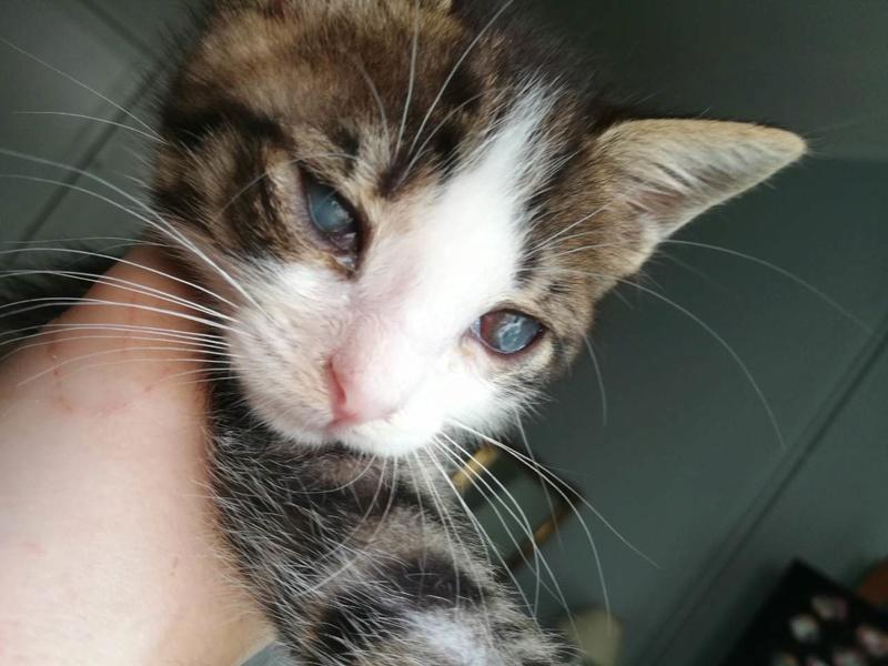 Γατάκι 1,5 μηνων με ελκος στο ματι 0-02-011
