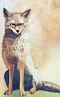 Présentation de White Wind Fox10