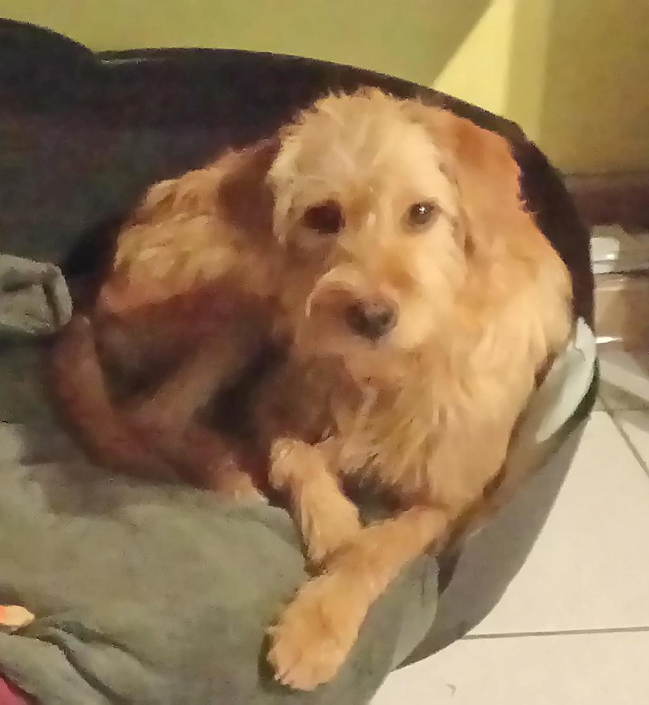 Oscar - mâle x fauve de bretagne (01/02/2018) 76250610