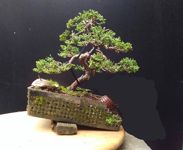 Proyecto planton itoigawa Img_2028