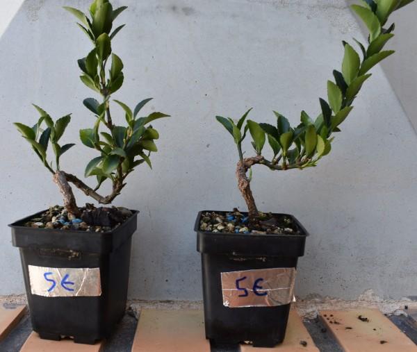 Venta de plantones y acentos Rdsc_320