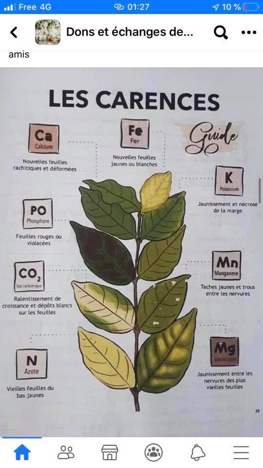 Plantes qui blanchissent  12026310