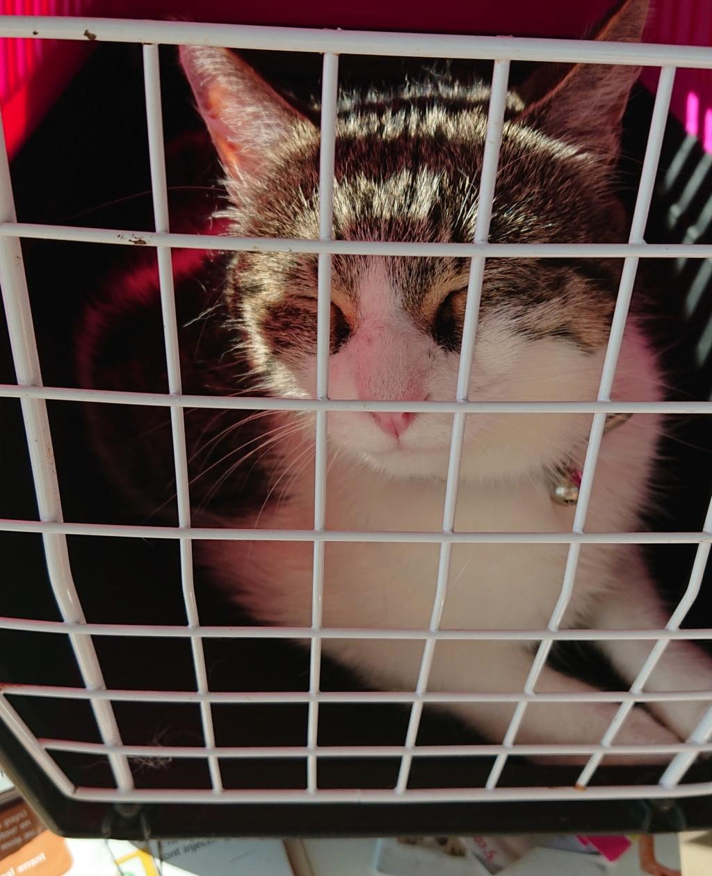 CACAHUETE, chaton mâle né env août 2014 - adopté par Zab's (10) - Page 2 _2018017
