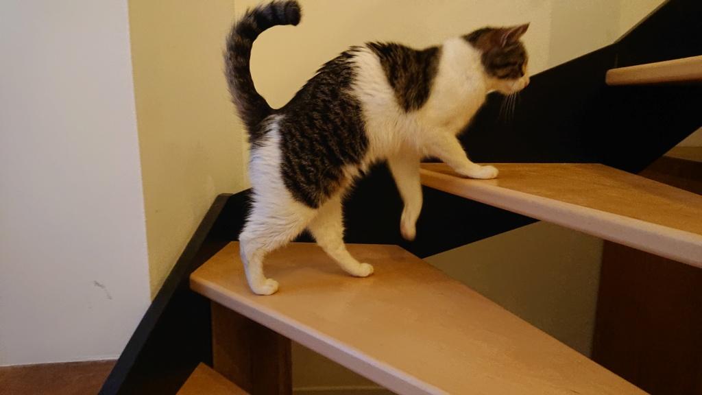 CACAHUETE, chaton mâle né env août 2014 - adopté par Zab's (10) - Page 2 Dsc_0614