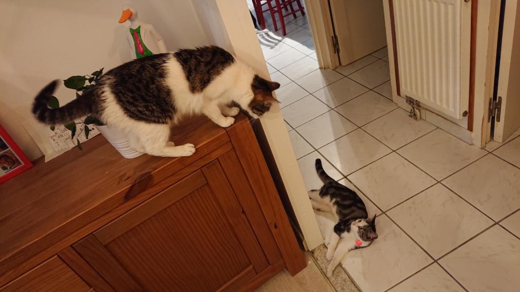 CACAHUETE, chaton mâle né env août 2014 - adopté par Zab's (10) - Page 2 Dsc_0615