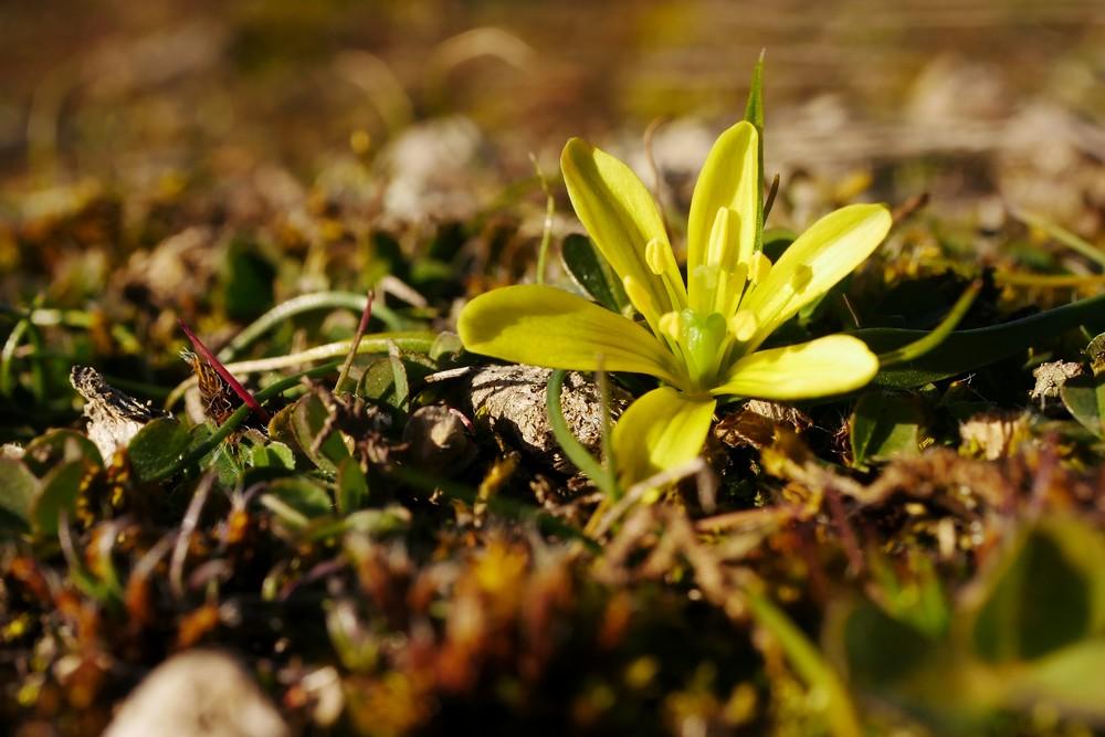 En attendant les orchidées... _1210811
