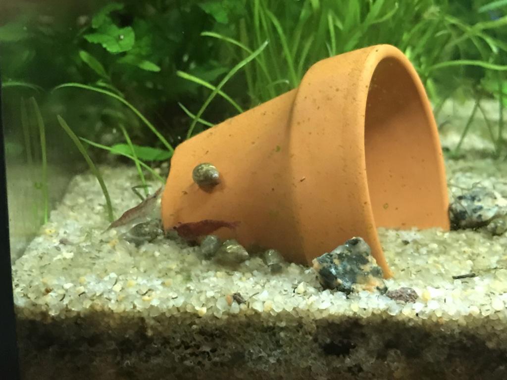 Mon premier aquarium : 60L planté - présentation. - Page 2 04247910