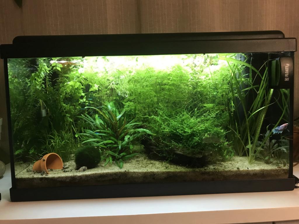 Mon premier aquarium : 60L planté - présentation. - Page 2 0adcda10