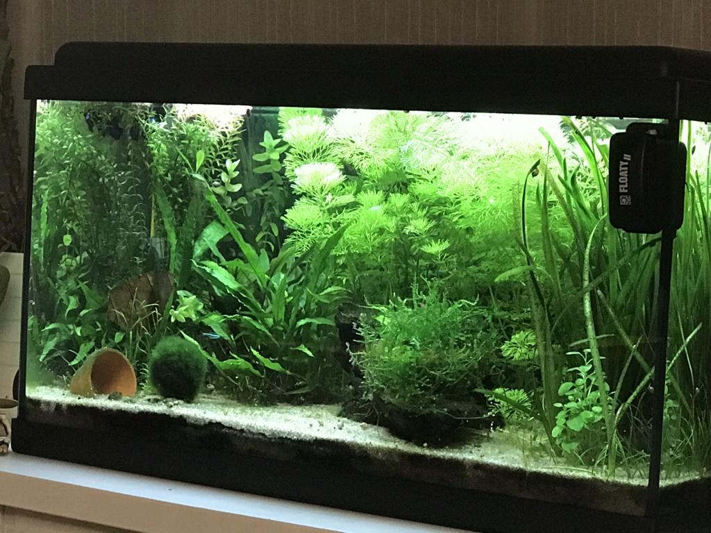 Mon premier aquarium : 60L planté - présentation. - Page 5 0bcf0f10