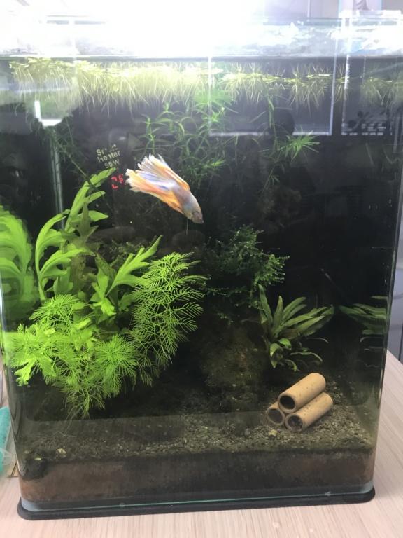 Mon 3ème aquarium 20L planté => passage en low tech ? 117cee10