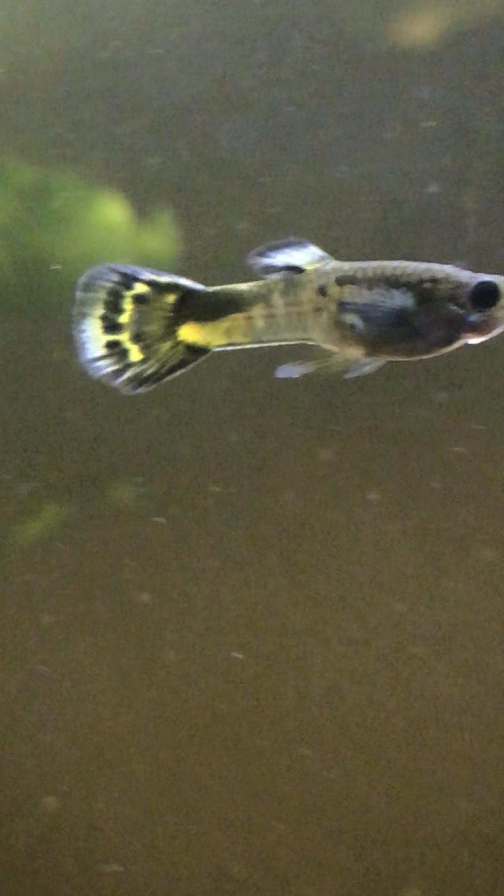 Mon 2ème aquarium 300 L planté  13450110