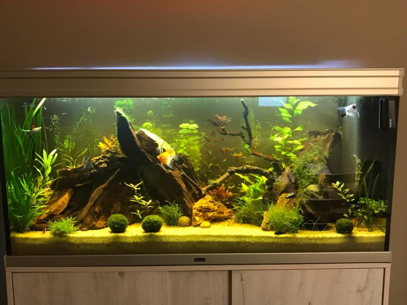 Présentation de mon aquarium - Page 5 15424610