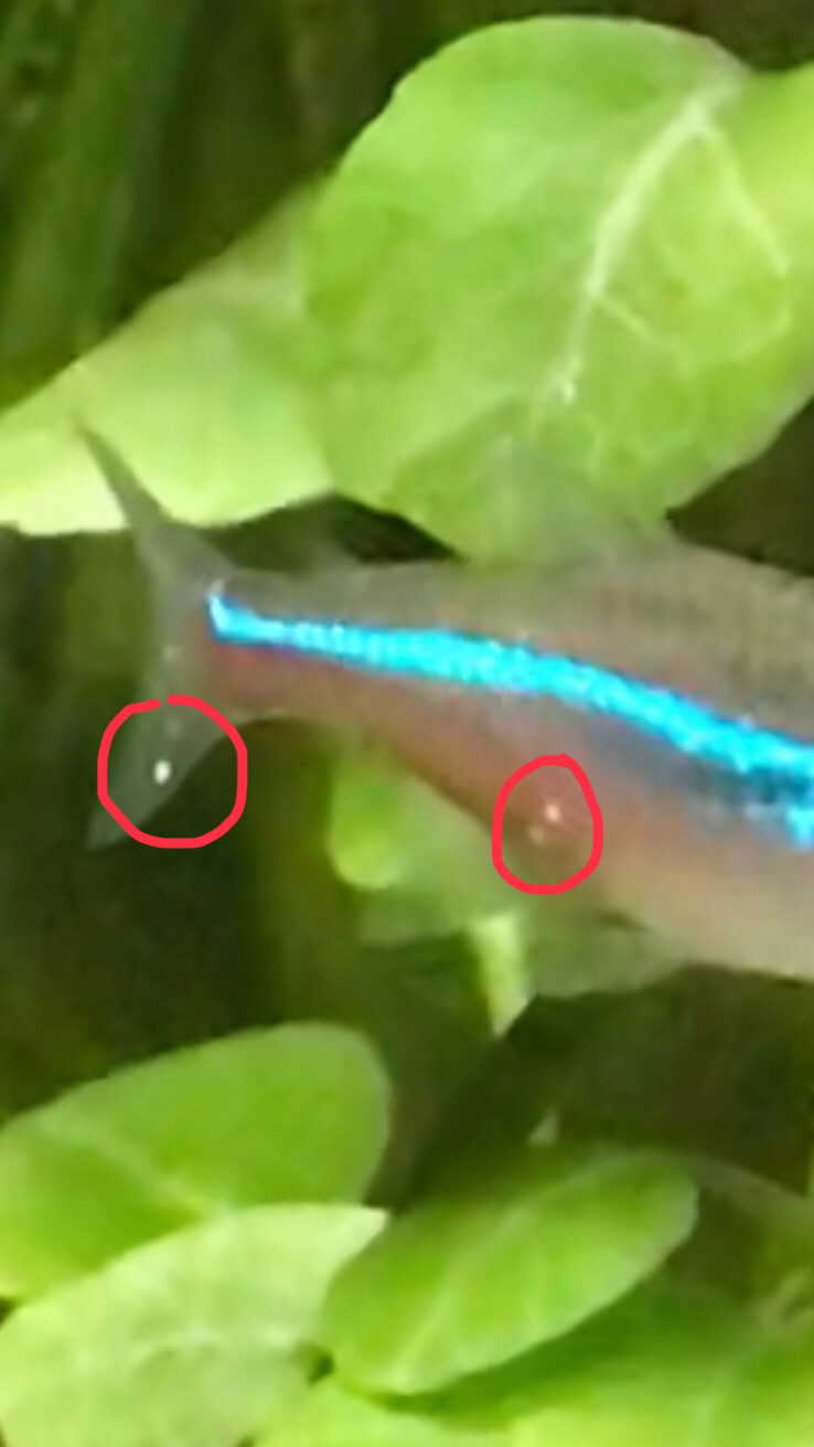 Qui connait Easy life anti spot contre les points blancs utilisé avec des crevettes 15490910