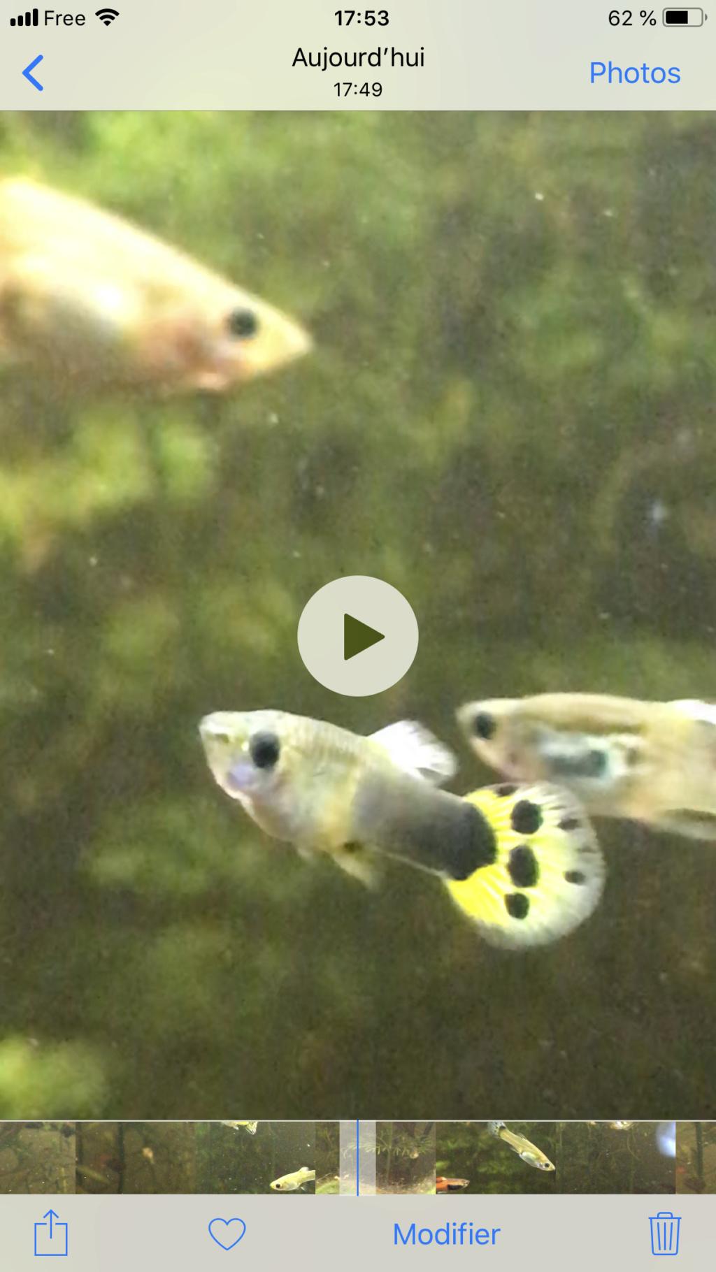 Mon 2ème aquarium 300 L planté  1bbc2510