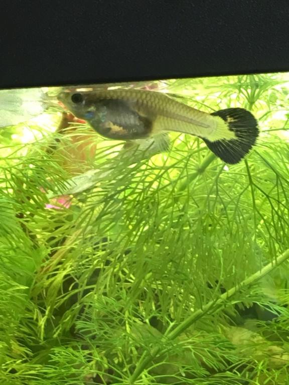 Mon premier aquarium 60L planté : nos nouveaux copains 2322f710