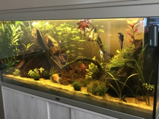 Aquascape asiatique - Page 2 300l12