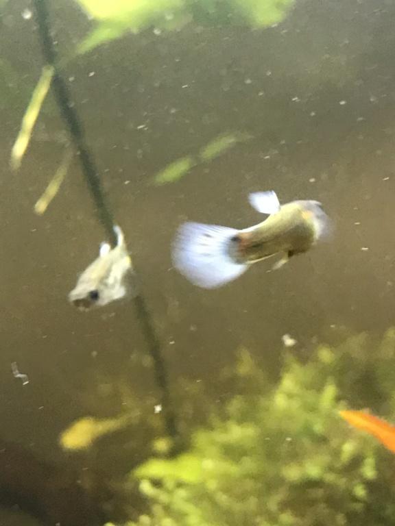 Mon 2ème aquarium 300 L planté  333e1410