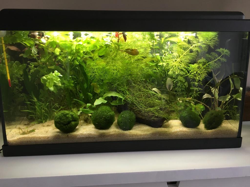 Mon premier aquarium : 60L planté - présentation. 34315910