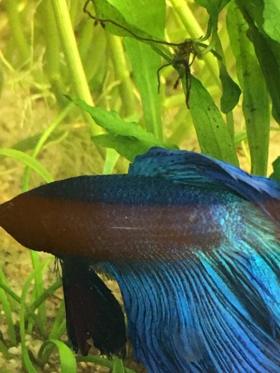 Mon premier aquarium 60L planté : nos nouveaux copains 3de3e410